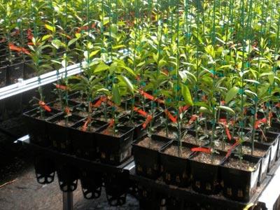 Plantas en charolas (bandejas) de plástico inyectado