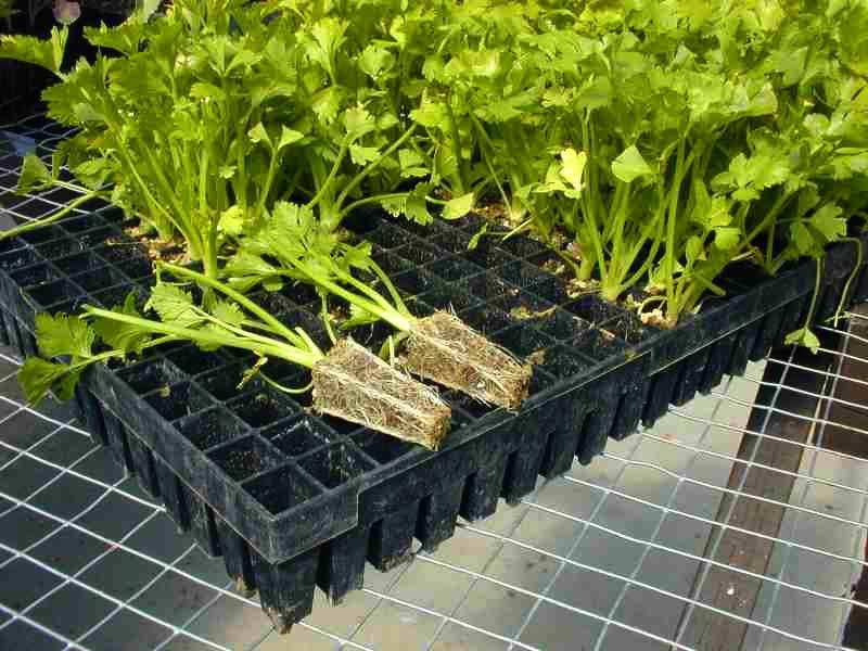 Charolas de pl stico para siembra - Plantas de plastico ikea ...