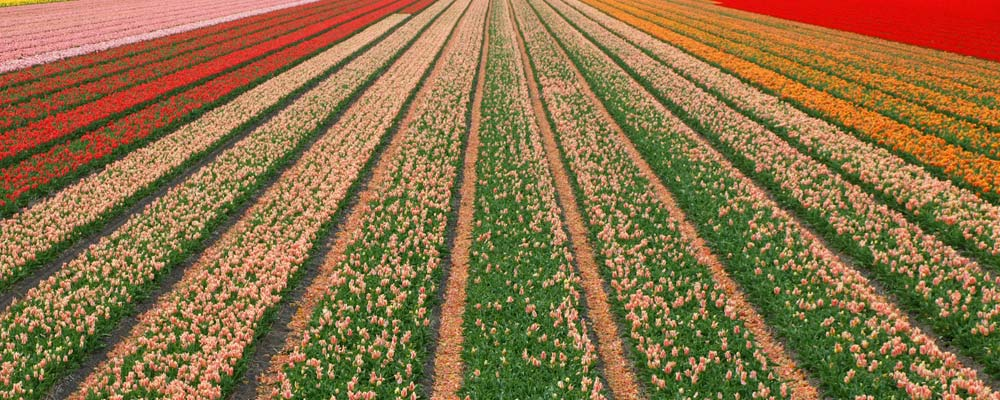 slider-portada-fondo-flores