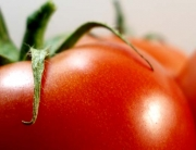 Tomates en invernadero